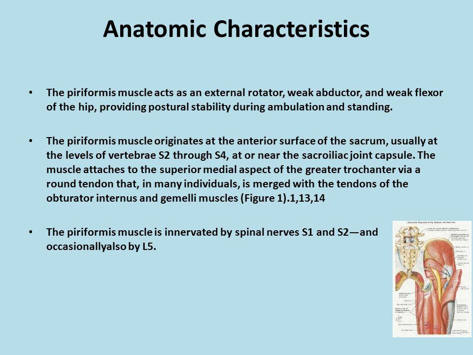 Anatomic Characteristics