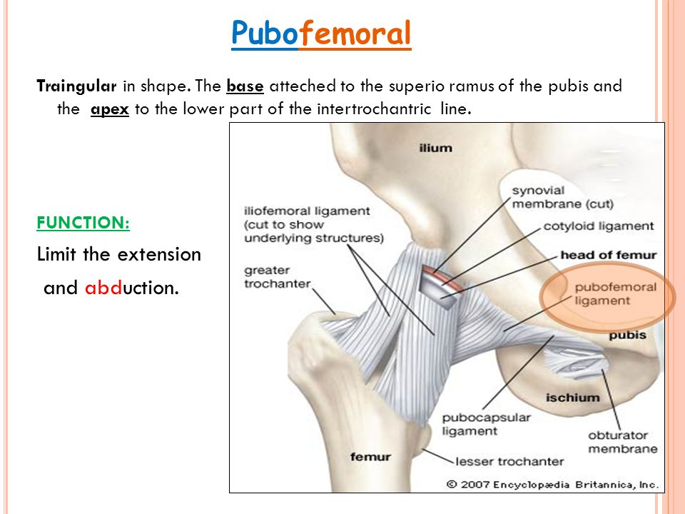 Pubofemoral Limit the extension and abduction.