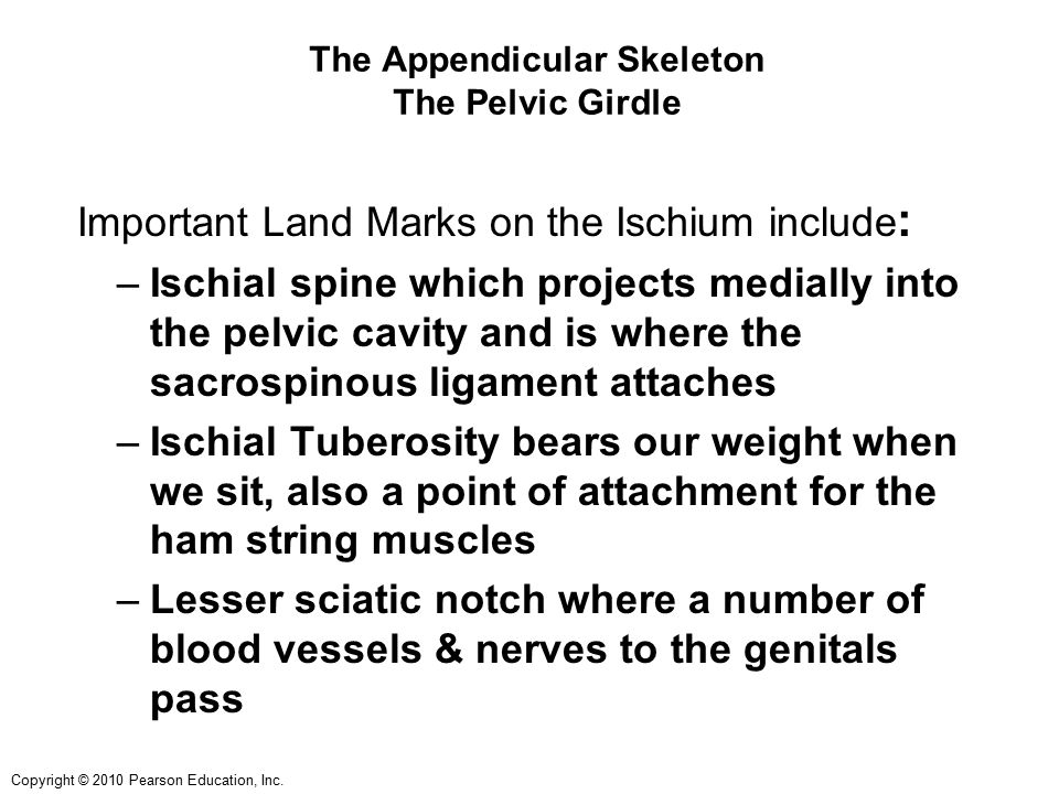 The Appendicular Skeleton The Pelvic Girdle
