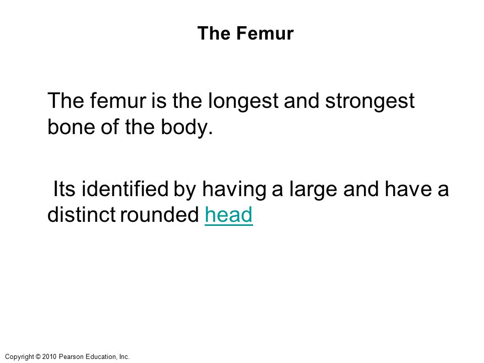 The Femur The femur is the longest and strongest bone of the body.