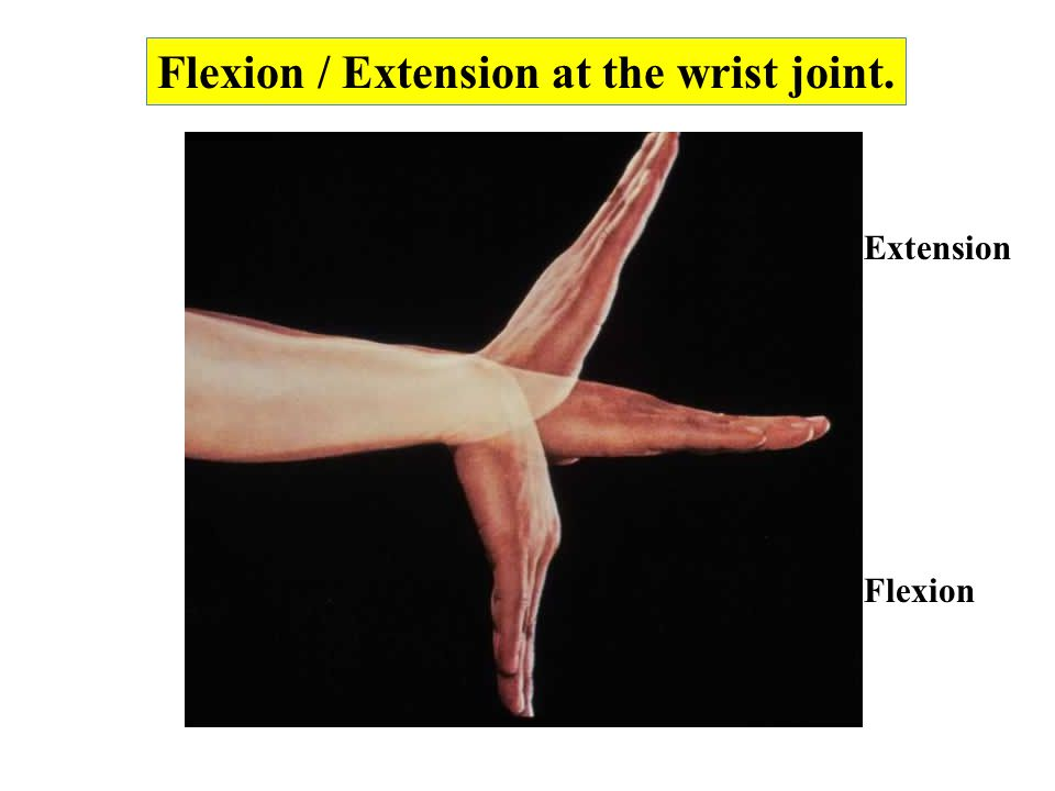 Flexion / Extension at the wrist joint.