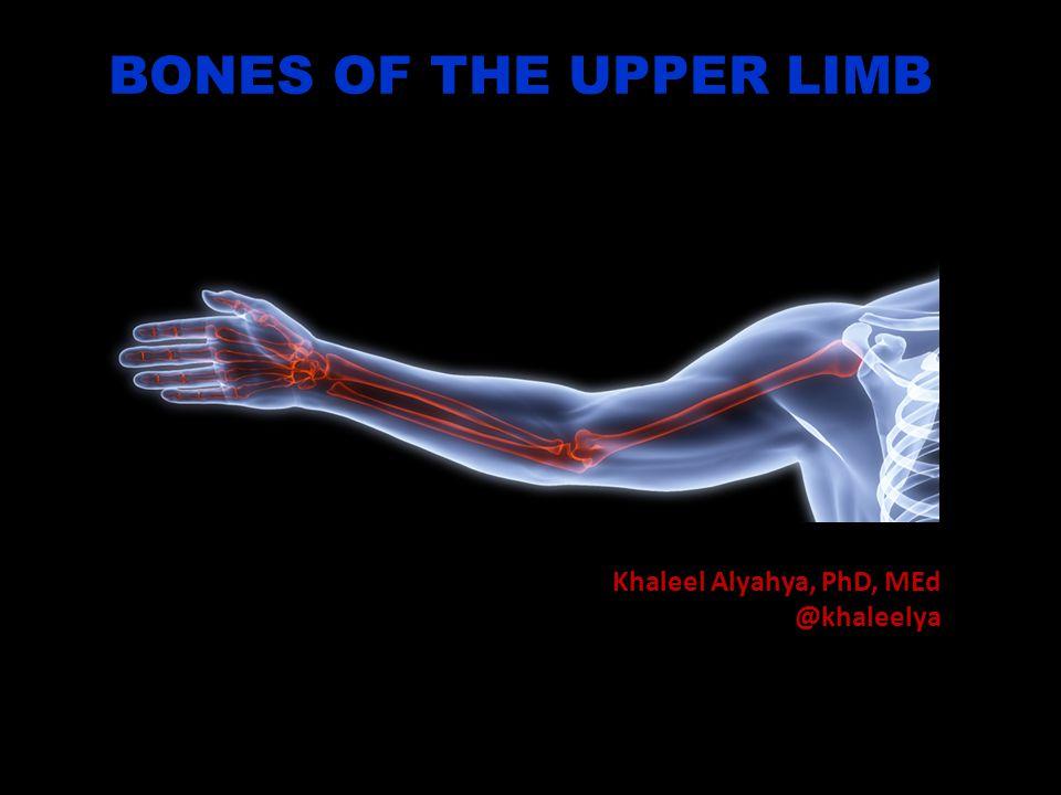 BONES OF THE UPPER LIMB Khaleel Alyahya, PhD, MEd @khaleelya