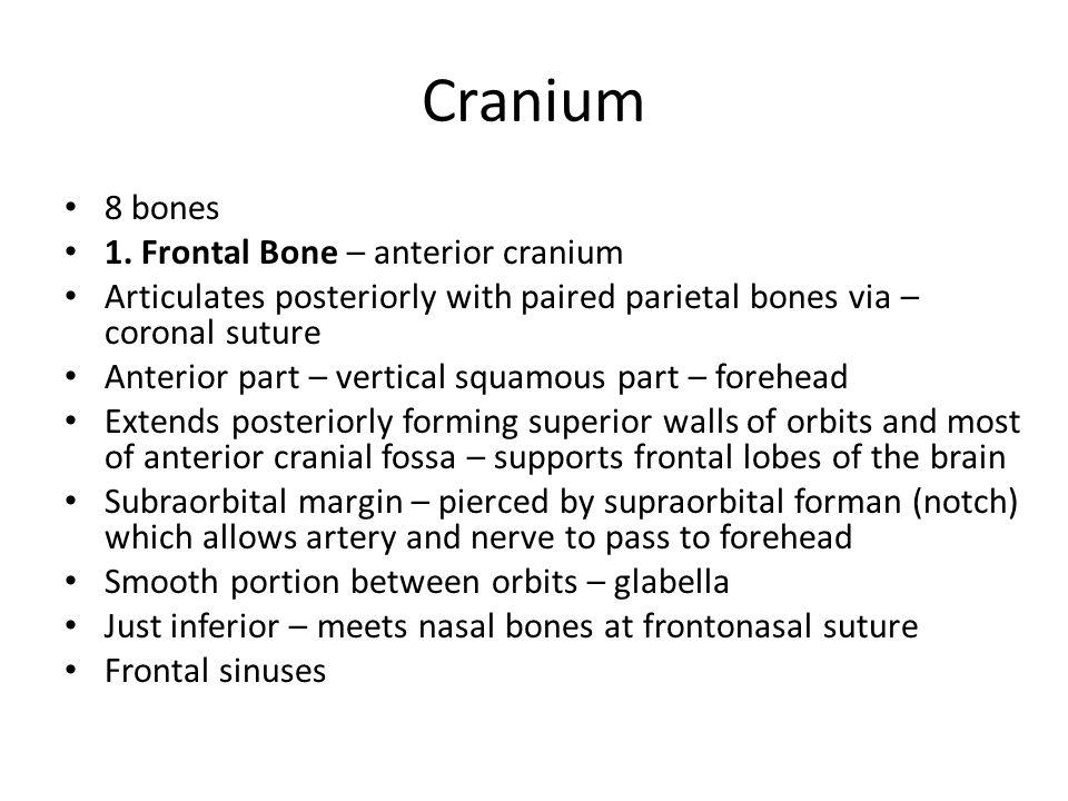 Cranium 8 bones 1. Frontal Bone – anterior cranium