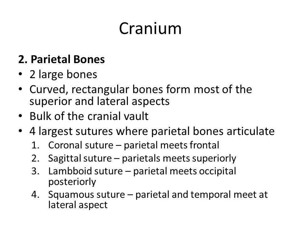 Cranium 2. Parietal Bones 2 large bones
