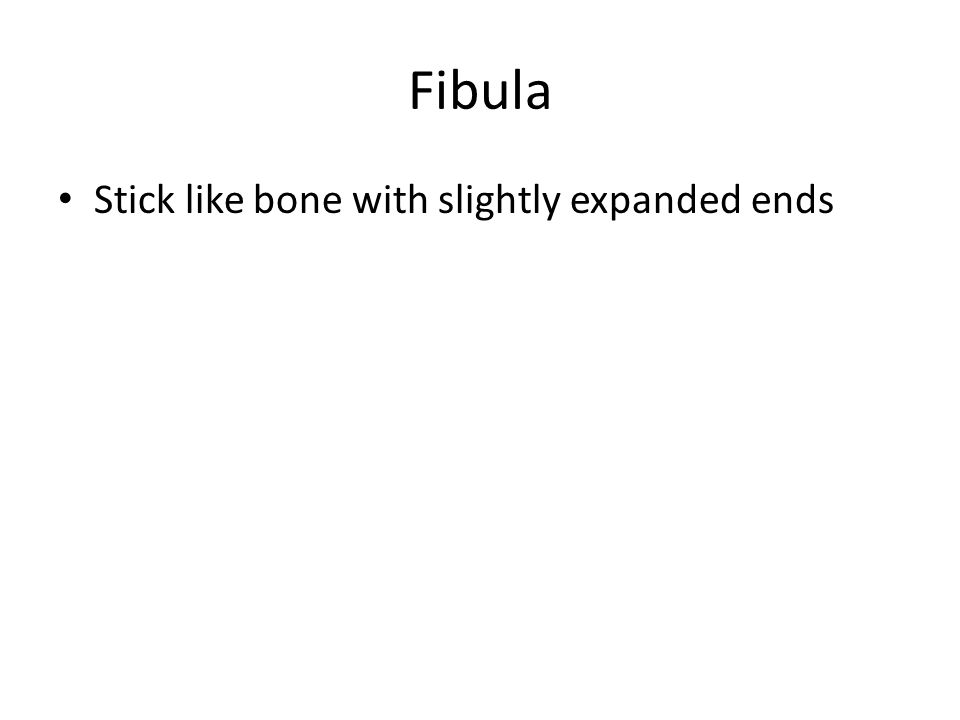 Fibula Stick like bone with slightly expanded ends