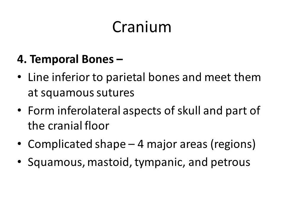 Cranium 4. Temporal Bones –