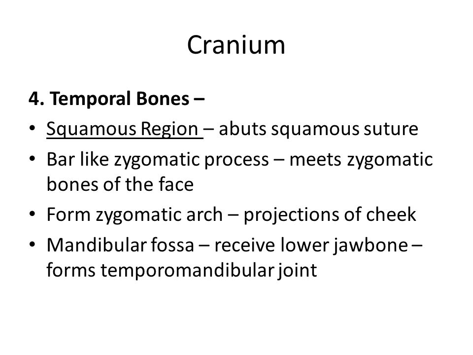 Cranium 4. Temporal Bones – Squamous Region – abuts squamous suture