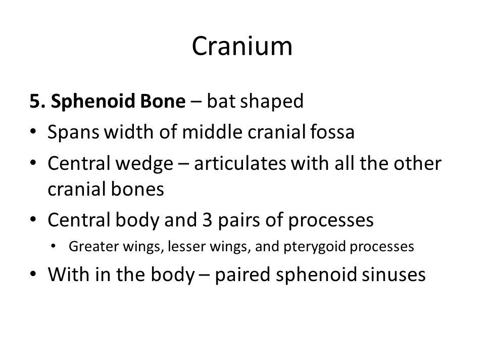Cranium 5. Sphenoid Bone – bat shaped