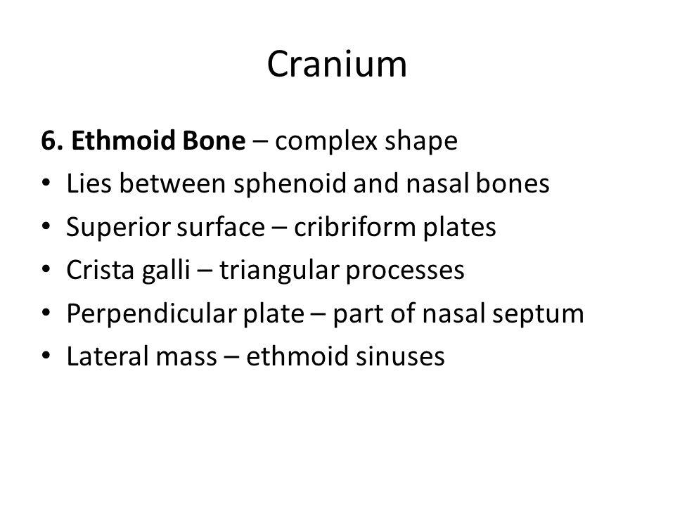Cranium 6. Ethmoid Bone – complex shape