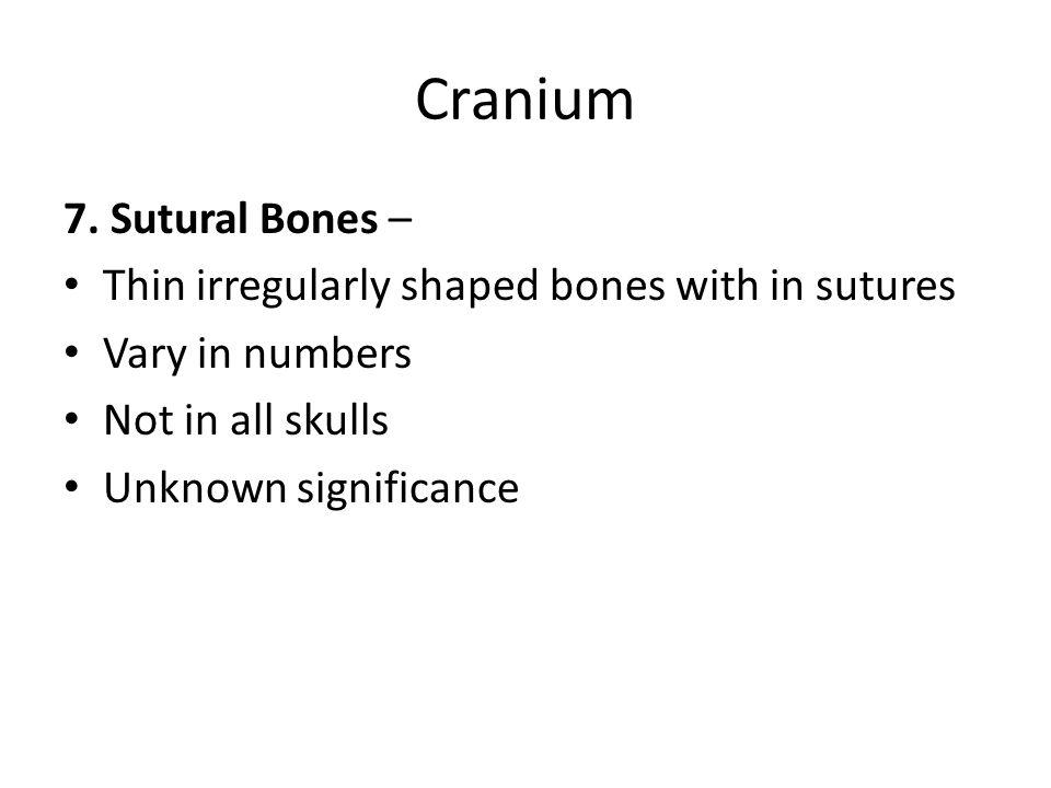 Cranium 7. Sutural Bones –