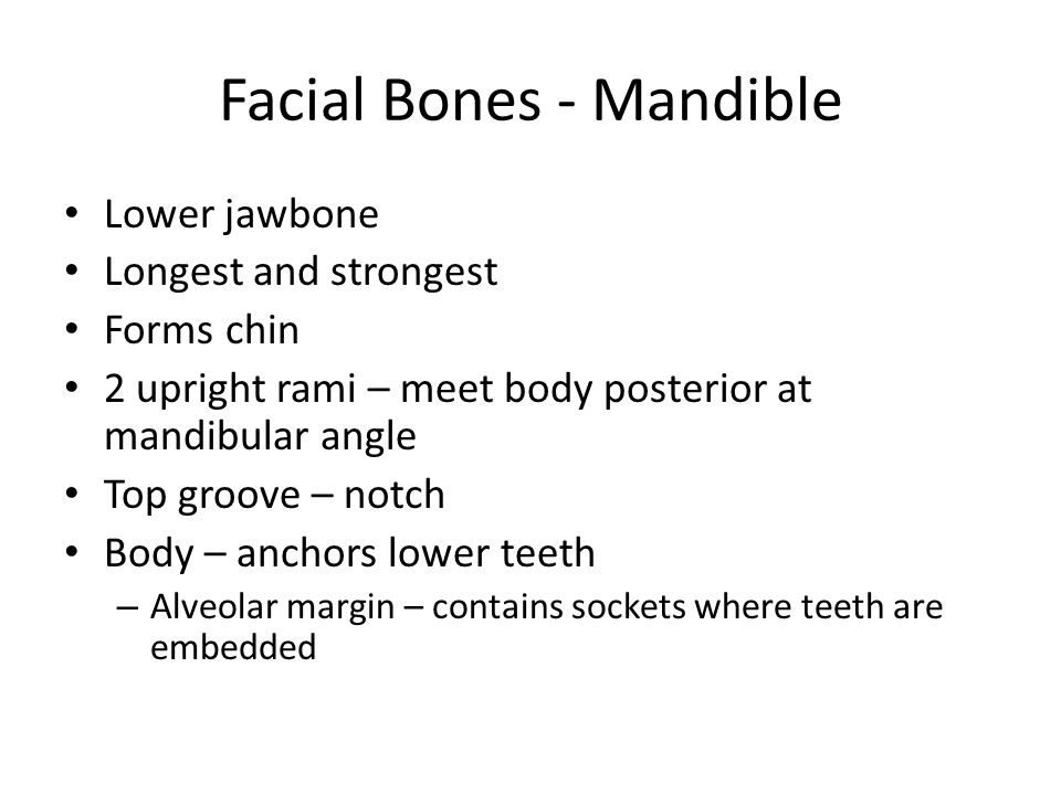 Facial Bones - Mandible
