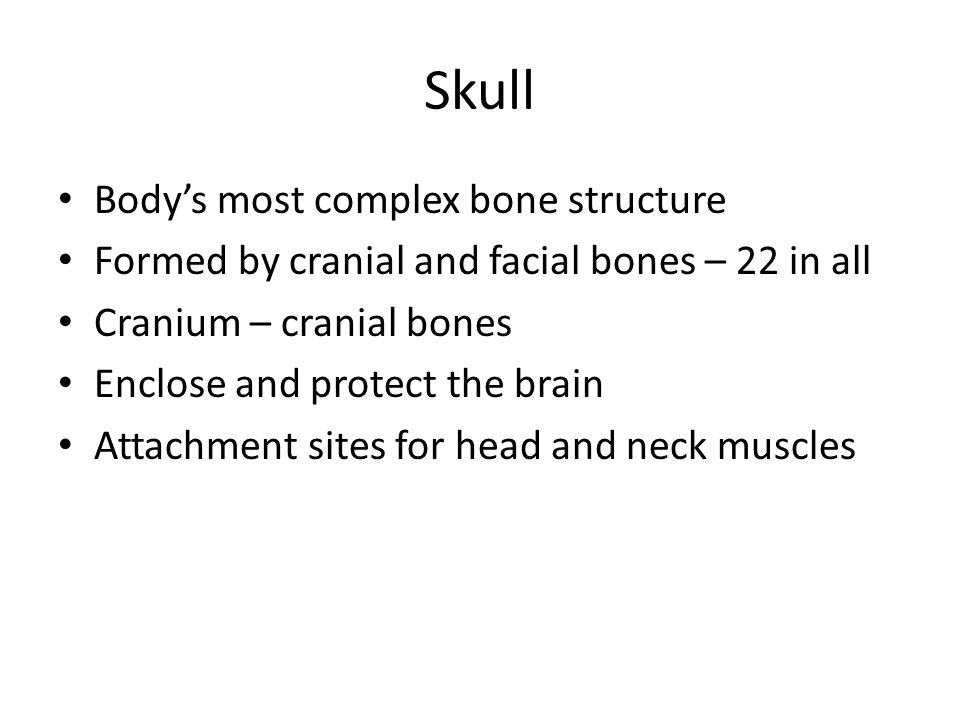 Skull Body's most complex bone structure