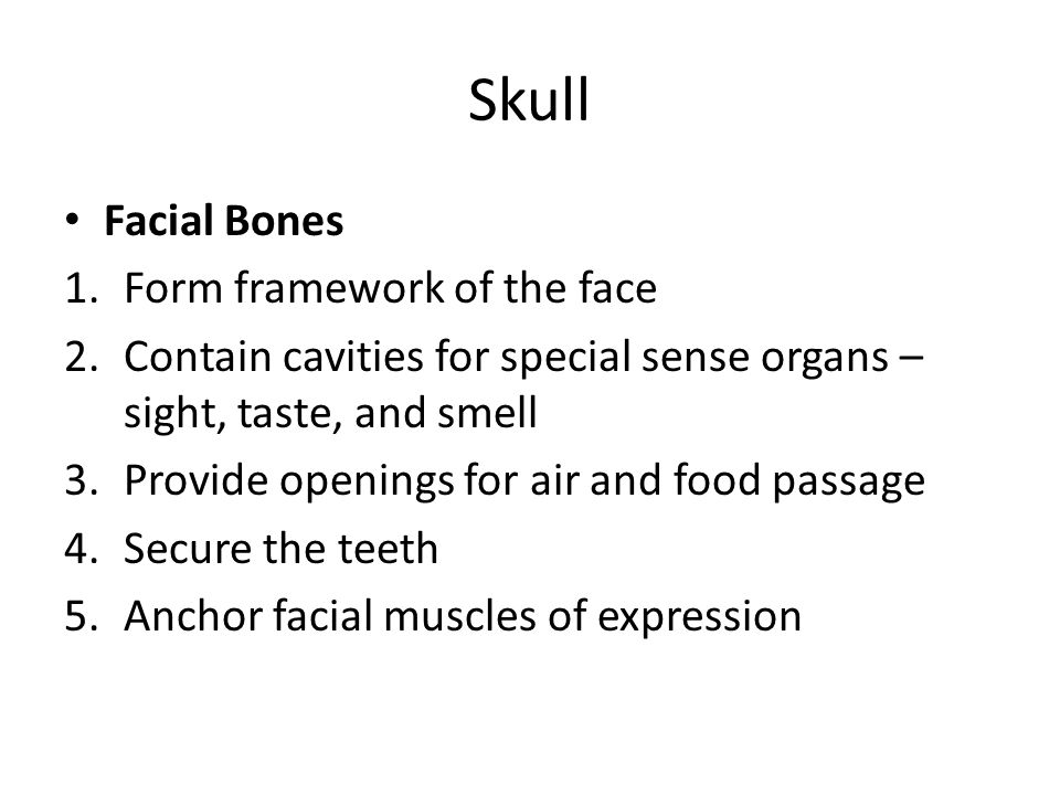 Skull Facial Bones Form framework of the face