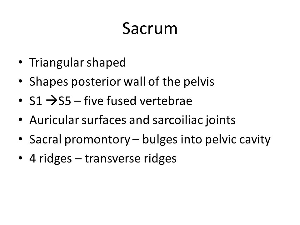 Sacrum Triangular shaped Shapes posterior wall of the pelvis