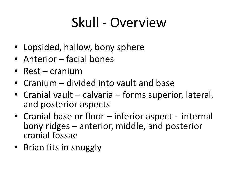 Skull - Overview Lopsided, hallow, bony sphere Anterior – facial bones