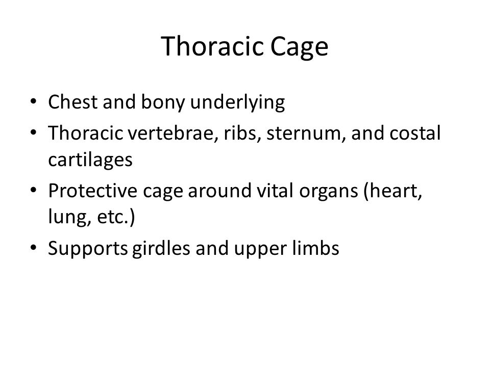 Thoracic Cage Chest and bony underlying