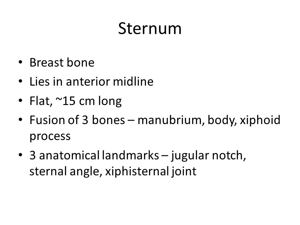 Sternum Breast bone Lies in anterior midline Flat, ~15 cm long