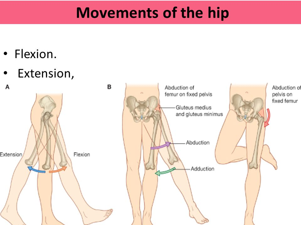 Movements of the hip Flexion. Extension,