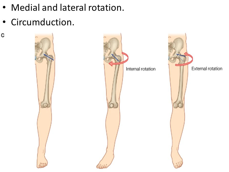Medial and lateral rotation.