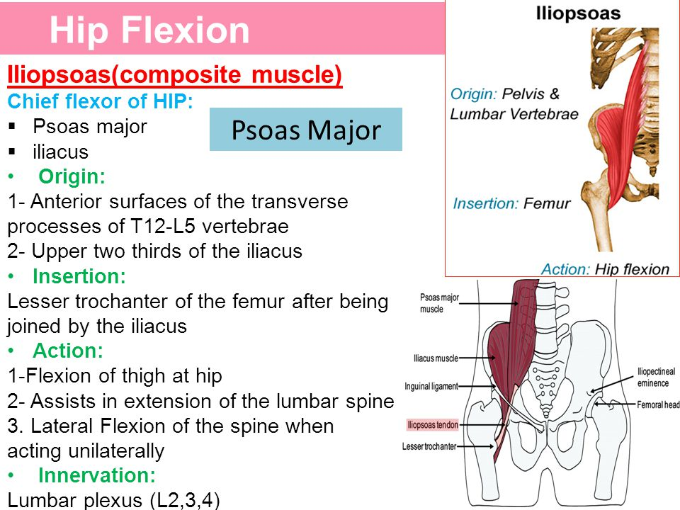 Hip Flexion Psoas Major Iliopsoas(composite muscle)