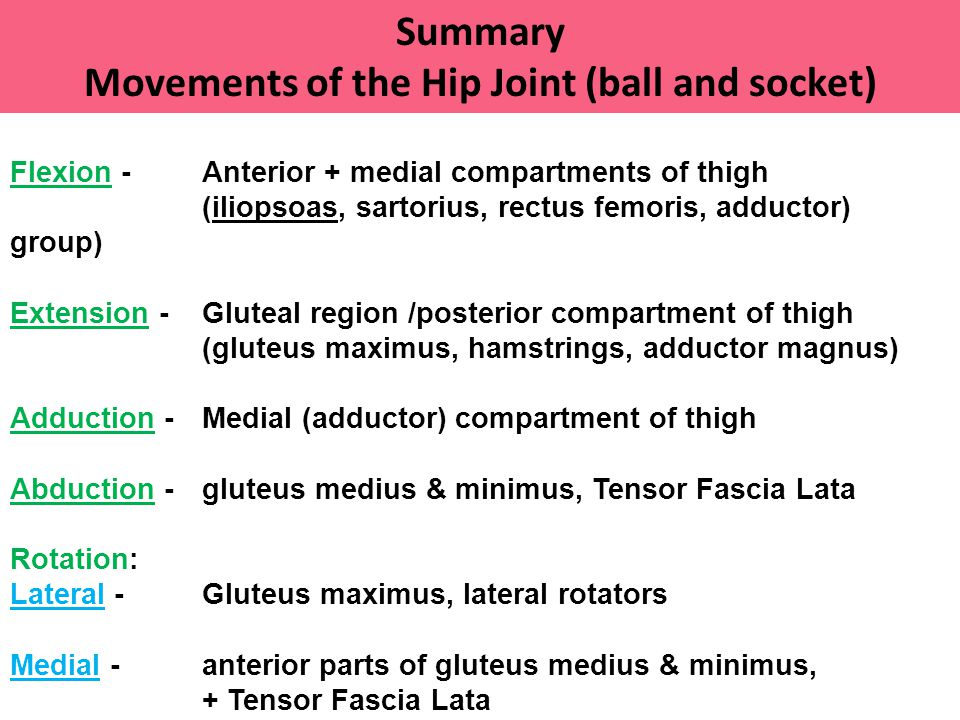 Movements of the Hip Joint (ball and socket)