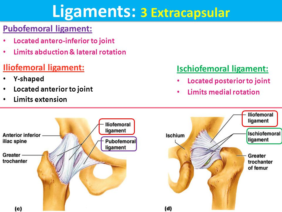 Ligaments: 3 Extracapsular