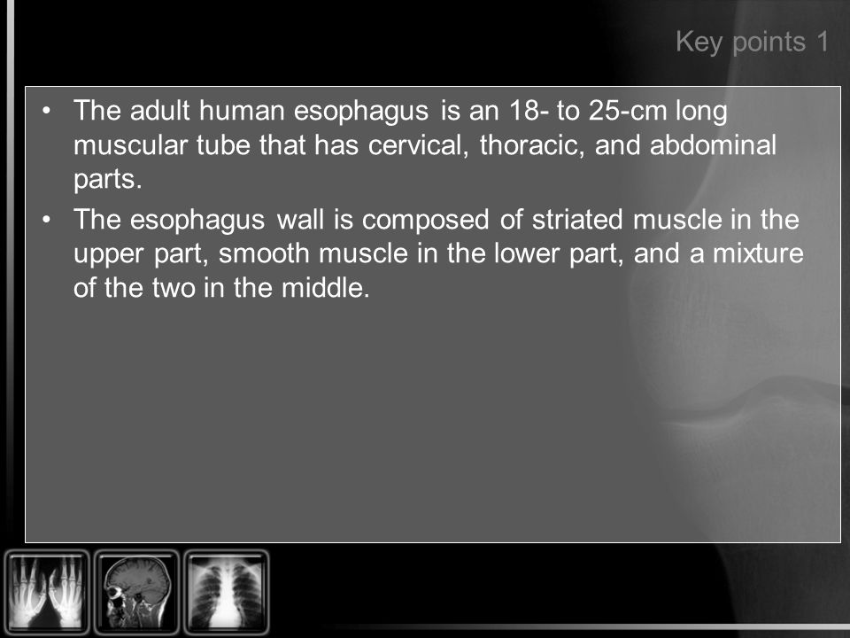 Key points 1 The adult human esophagus is an 18- to 25-cm long muscular tube that has cervical, thoracic, and abdominal parts.