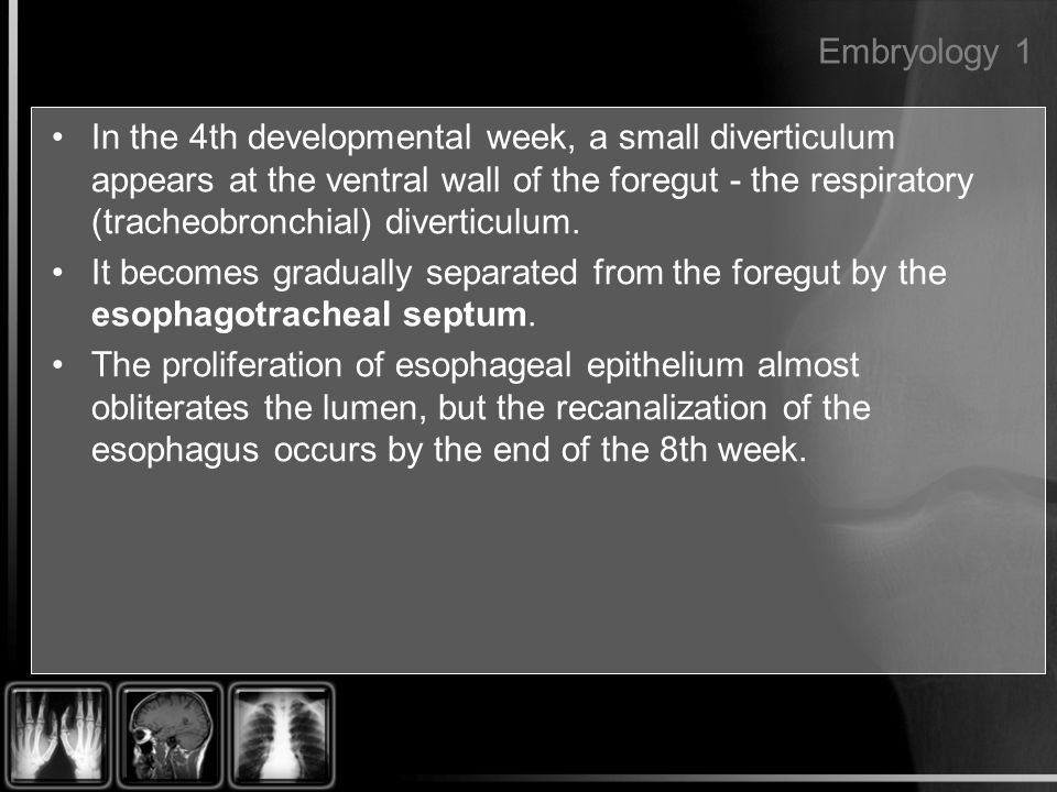 Embryology 1