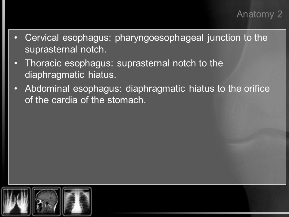 Anatomy 2 Cervical esophagus: pharyngoesophageal junction to the suprasternal notch.