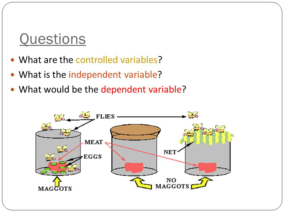 Questions What are the controlled variables