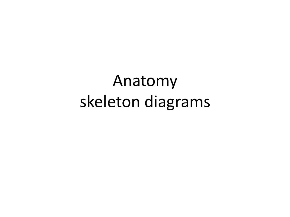 Anatomy skeleton diagrams