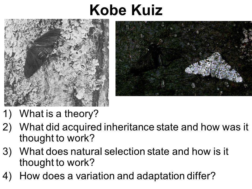 Kobe Kuiz What is a theory