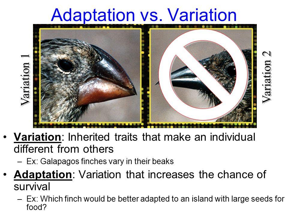 Adaptation vs. Variation