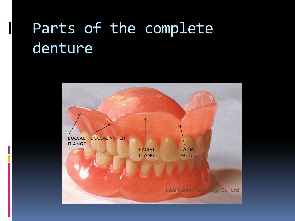Parts of the complete denture