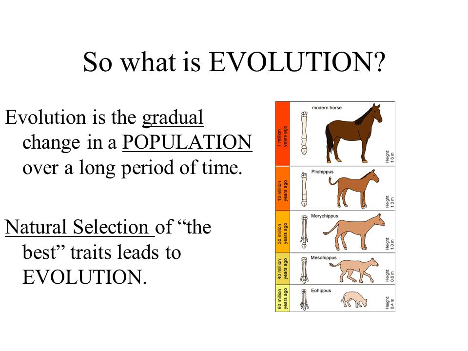 So what is EVOLUTION Evolution is the gradual change in a POPULATION over a long period of time.