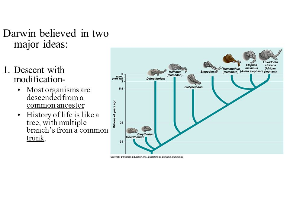 Darwin believed in two major ideas: