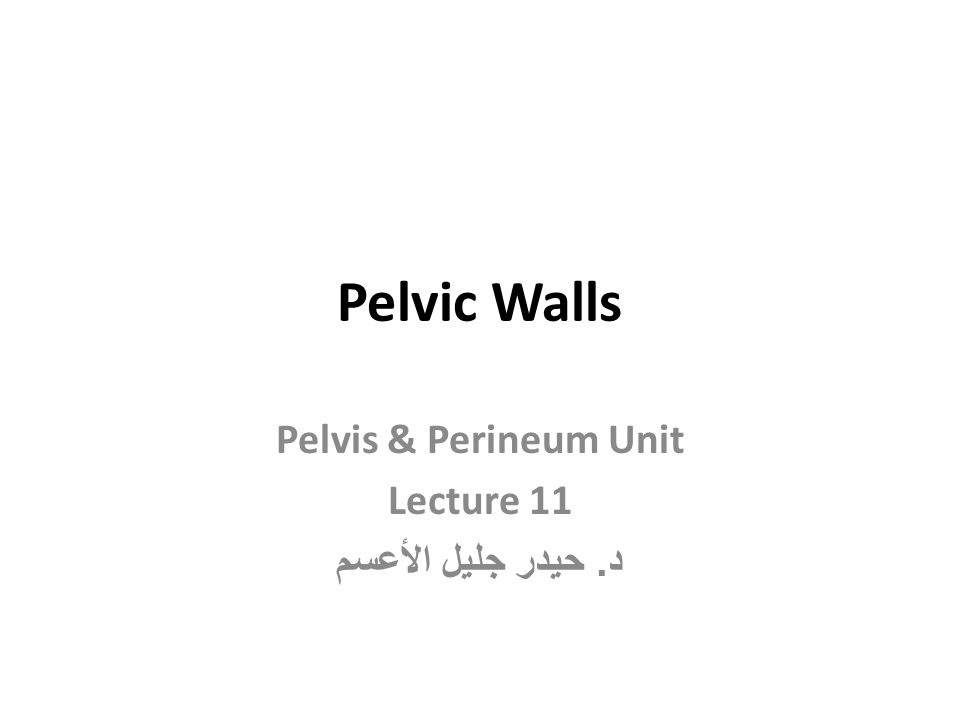 Pelvis & Perineum Unit Lecture 11 د. حيدر جليل الأعسم