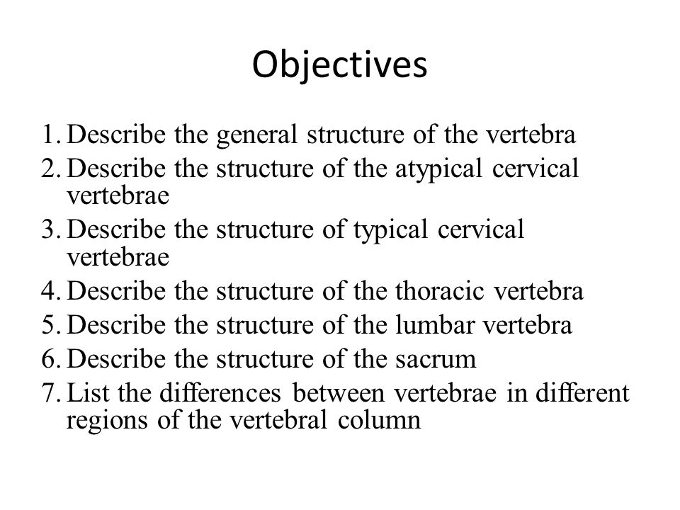 Objectives Describe the general structure of the vertebra