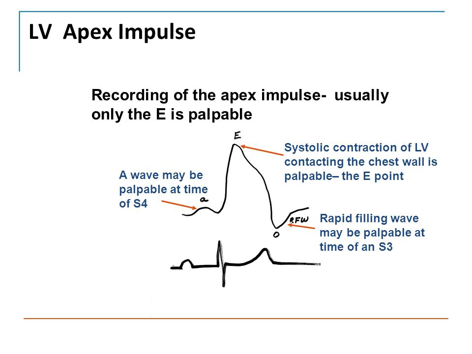 LV Apex Impulse Recording of the apex impulse- usually only the E is palpable.