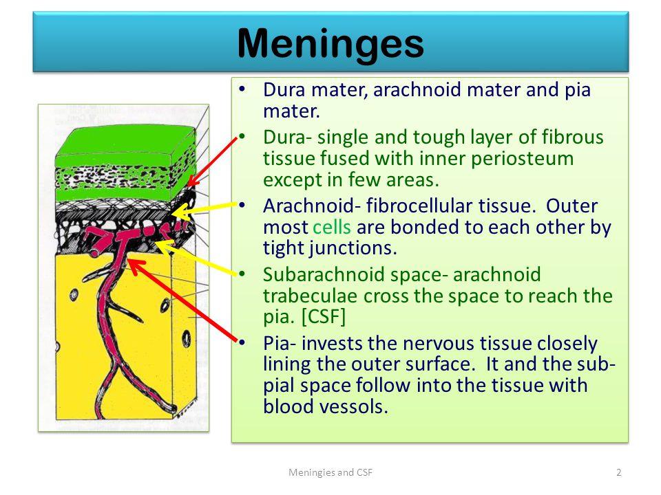Meninges Dura mater, arachnoid mater and pia mater.