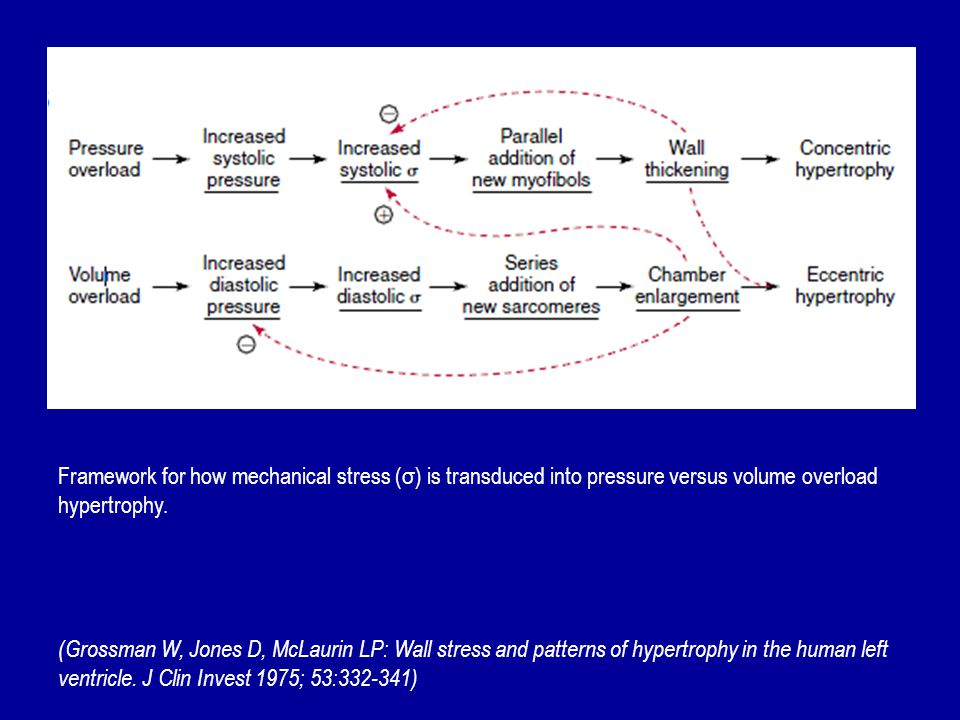 Framework for how mechanical stress (σ) is transduced into pressure versus volume overload hypertrophy.
