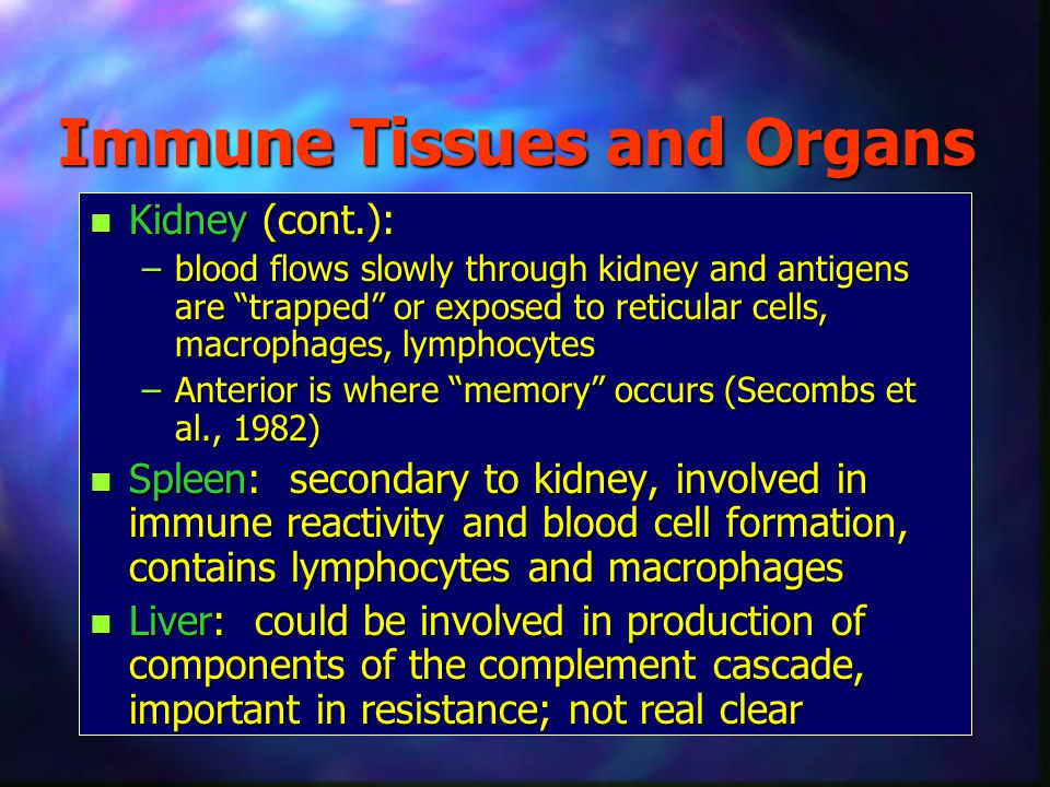 Immune Tissues and Organs