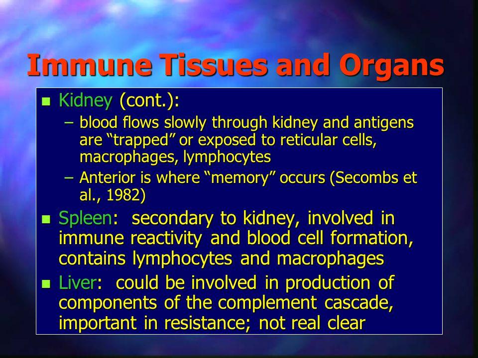 Immune Tissues and Organs