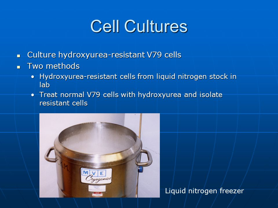 Cell Cultures Culture hydroxyurea-resistant V79 cells Two methods