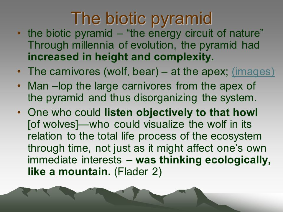 The biotic pyramid