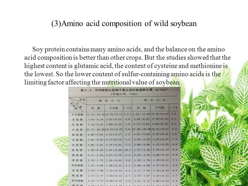 (3)Amino acid composition of wild soybean