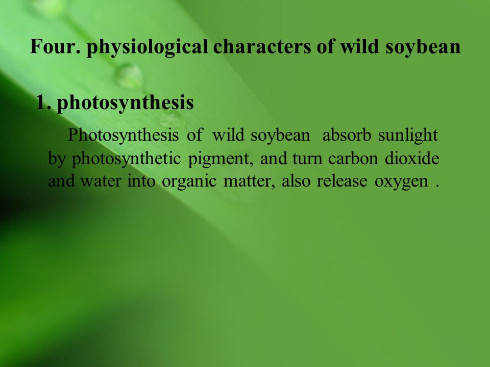 Four. physiological characters of wild soybean