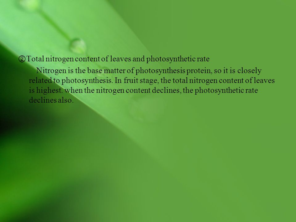 ②Total nitrogen content of leaves and photosynthetic rate