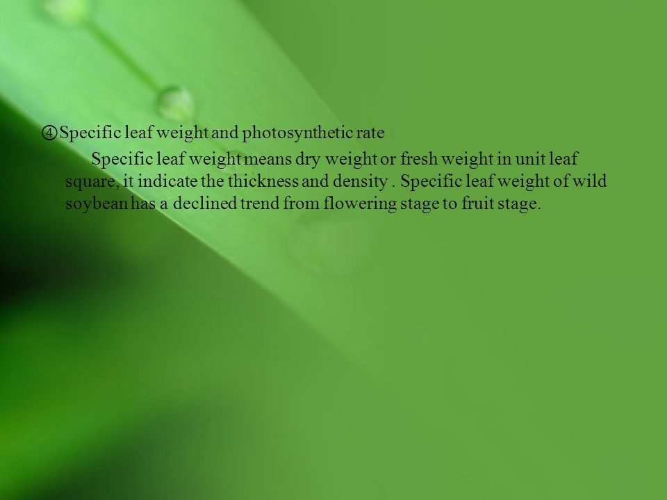 ④Specific leaf weight and photosynthetic rate