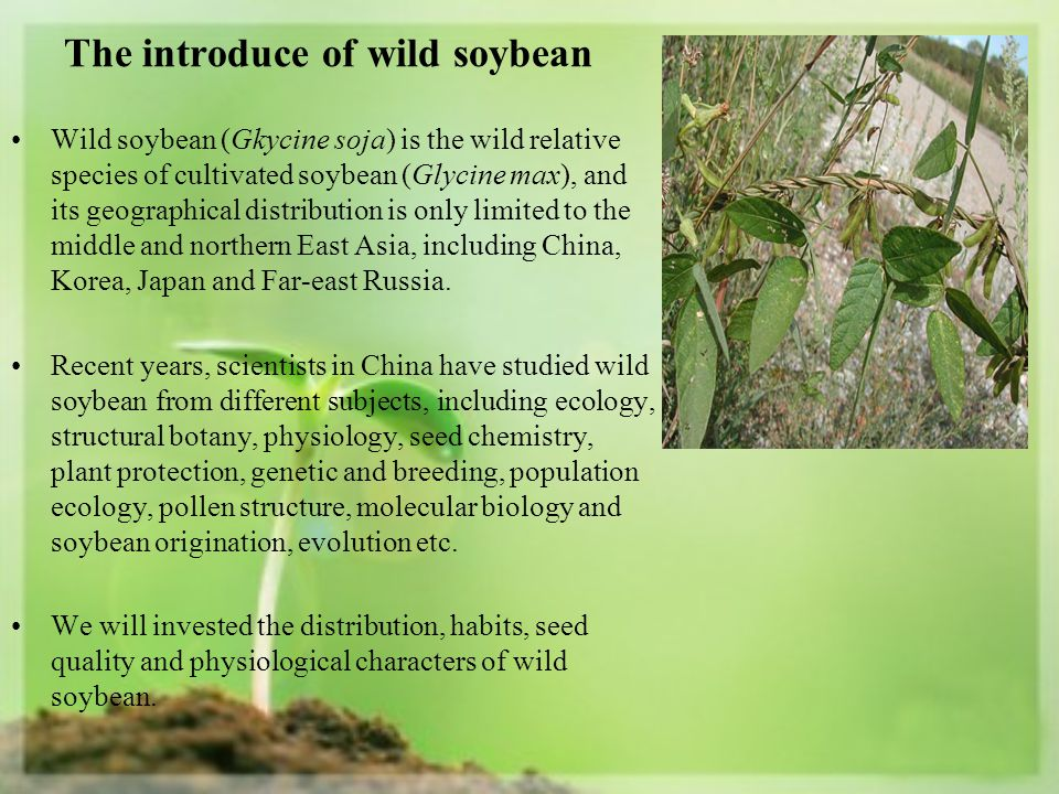 The introduce of wild soybean